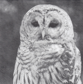 Owl, servet