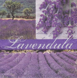 Dream of Lavender, servet