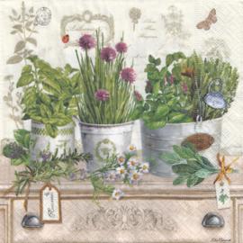 Herbarium, servet