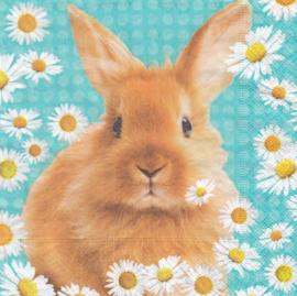 Rabbit, servet