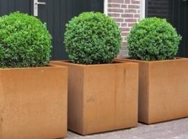 Cortenstaal plantenbak 'Angoli' L50xB50xH50 cm