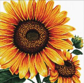 Voorbedrukt borduurpakket Sunflower - Needleart World    nw-nc640-085