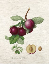 Borduurpakket The Nectarine Plum - Luca-S    ls-ba22480