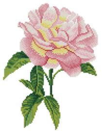 - bloemen