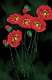 Voorbedrukt borduurpakket Red Poppies on black - Needleart World    nw-nc650-011