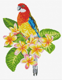 Voorbedrukt borduurpakket Frangipanni Rosella - Needleart World    nw-nc440-101
