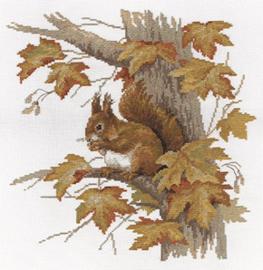 Borduurpakket Squirrel - PANNA    pan-1472-j
