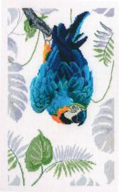 Borduurpakket Macaw - RTO    rto-m00745