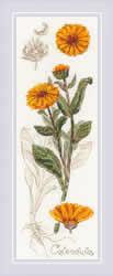 Borduurpakket Calendula - RIOLIS    ri-1798