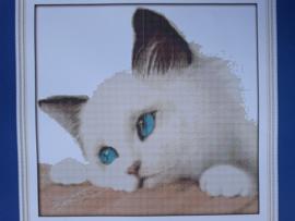 Cross Stitch / Blue cat