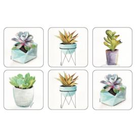 Onderzetters (6) - Pimpernel Succulents
