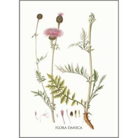 Kaart met Envelop Centaurea Scabiosa (A5) - Koustrup & Co.