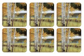 Onderzetters (6) - Pimpernel Birch Beauty