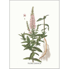 Kaart met Envelop Lythrum Salicaria (A5) - Koustrup & Co.
