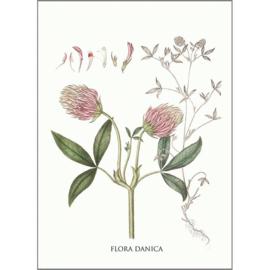 Kaart met Envelop Trifolium Medium (A5) - Koustrup & Co.
