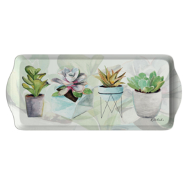Sandwich Tray (38,5 cm.) - Pimpernel Succulents