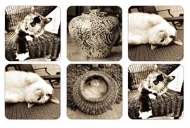 Onderzetters (6) - Pimpernel Kitty Club