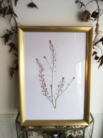Golden Frame : Hemp Plants