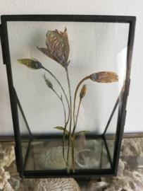Framed : Delicate Flowers
