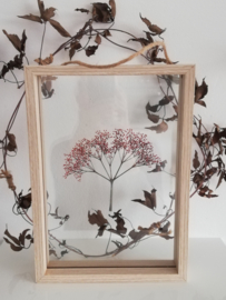 Framed : Vlierbloesem