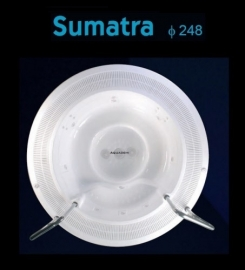 Sumatra 248