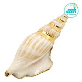Schelp Bedel Wulk Cream beige-gold ca. 61x15mm