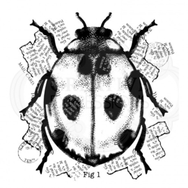 Ladybird - Clearstamps
