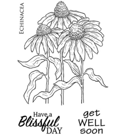 Echinacea - Clearstamps