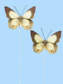 Vlinders X - Decoratie