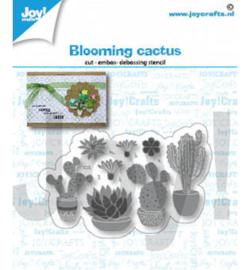 Bloeiende Cactussen - Stans