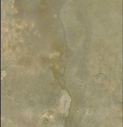 Opal Sea Oats