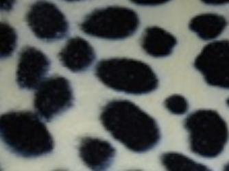 Kleur 52 Cheetah