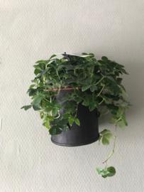 Plantenrek/ Wijnrek