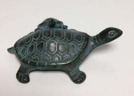 Schildpad met jong.