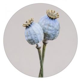 Muurcirkel | dried poppy 30cm