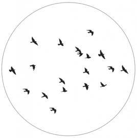 Muurcirkel | birds 40cm