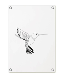 Tuinposter | Kolibrie