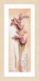 Iris botanisch