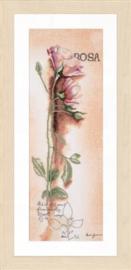 Rosa botanisch