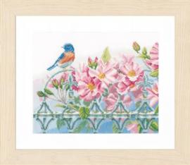 Vogeltjes op hek