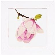 Magnolia knop