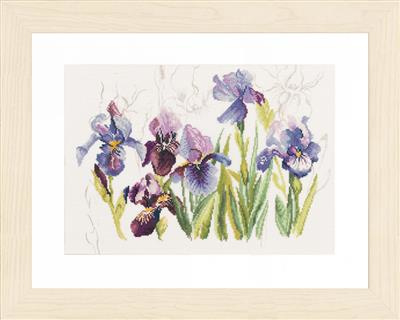 3 blauwe irissen