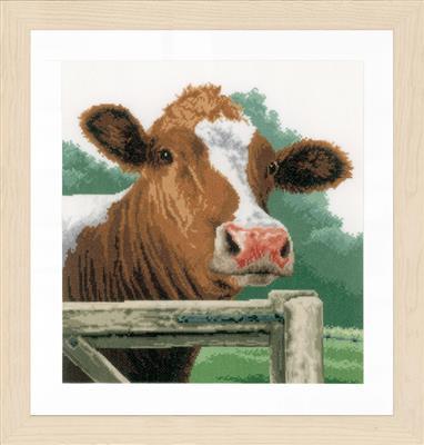 Verwonderde koe