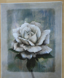 POSTER WITTE ROOS 50 x 40 cm