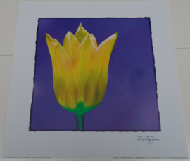 POSTER 33x33 cm COLOURFUL TULP II