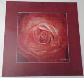 POSTER POETISCHE ROOS 2 50 x 50 cm