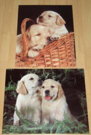 HONDEN PUPPIES RETRIEVER 2 POSTERS