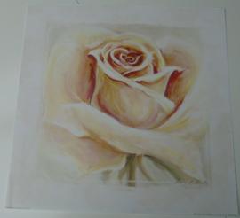 POSTER ROSE I 50 x 50 cm