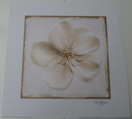 POSTER 33x33 cm BRIGHT WHITE II FLOWER