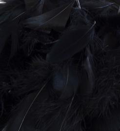 Zwarte veren